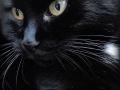 schwarze katzen bringen glück