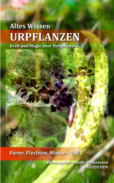 EBook-Illustration Cover-Urpflanzen